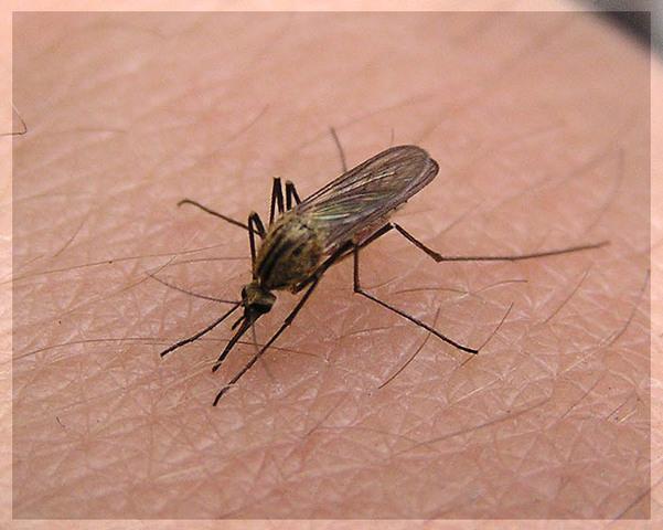а Как   Как устранить зуд и отек от комариных укусов   aKak.ru