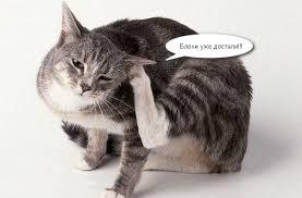 Дерматит у кошек   Мои домашние питомцы