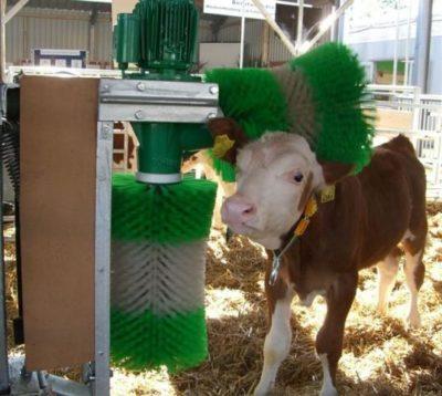 Мыть корову